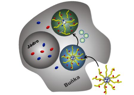 """Biodegradovatelné nanoterapeutikum s možností """"duálního"""" vázání léčiv"""