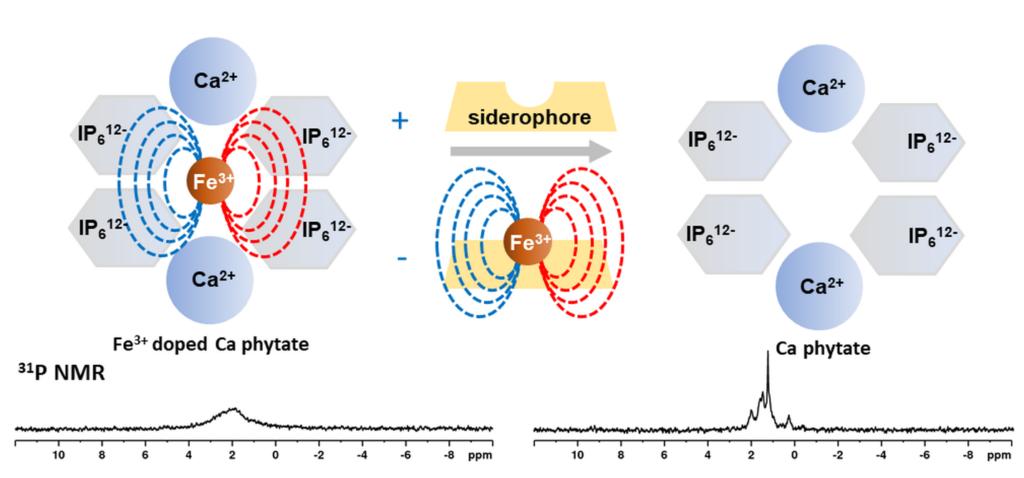 Koloidní sonda na bázi nanočástic fytátu vápenatého dopovaného železitými ionty pro 31P NMR monitoring bakteriálních sideroforů
