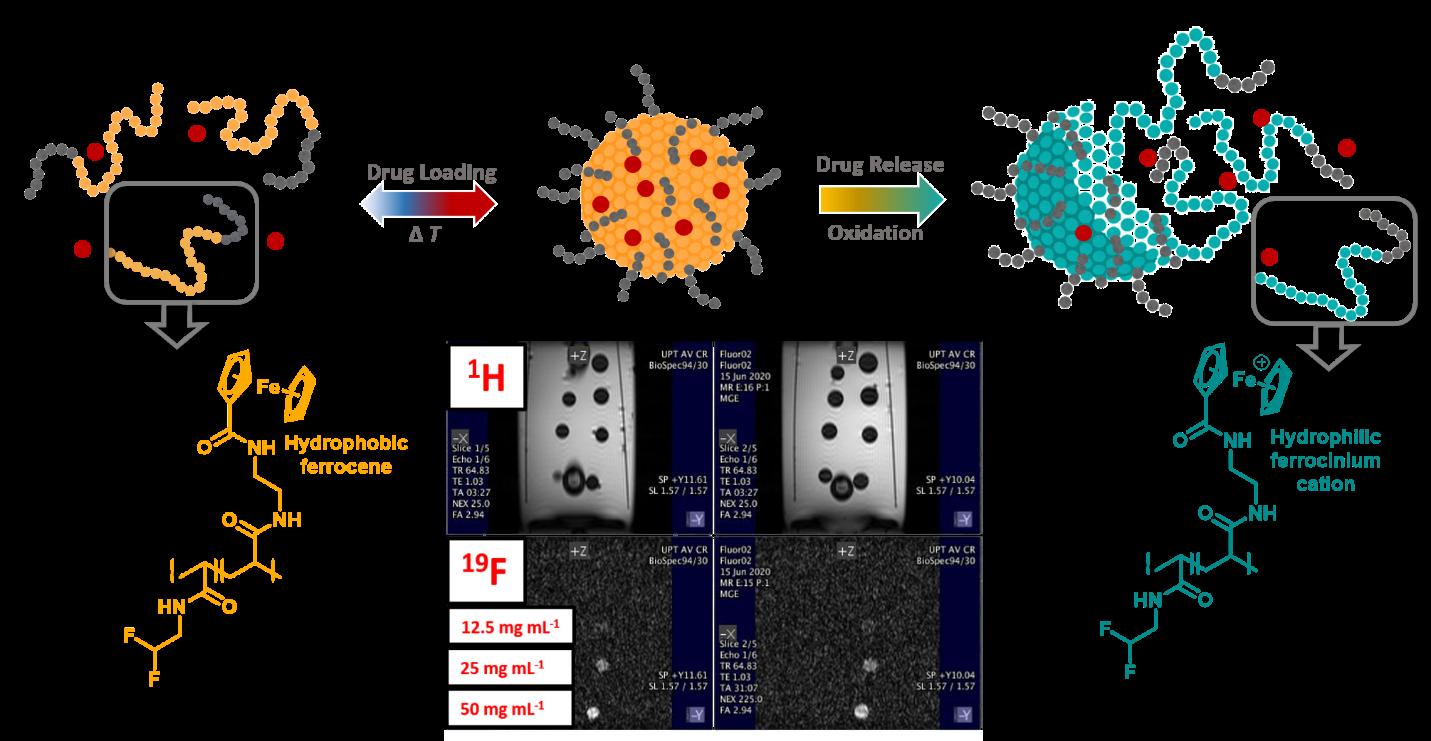 Polymerní nanočástice pro theranostiku nádorů a zánětu využívající 19F magnetickou rezonanci