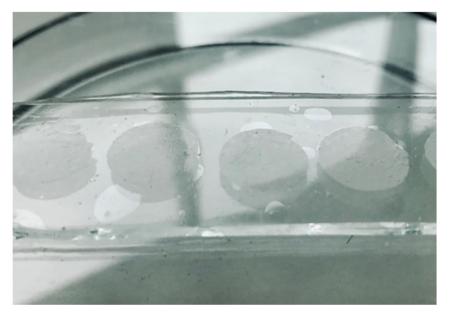 Hydrogely simulující živou tkáň
