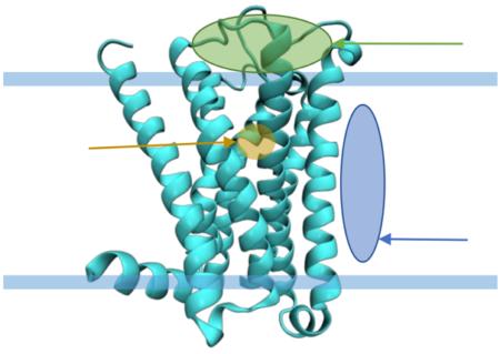 Identifikace neurosteroidů a popis jejich mechanismu