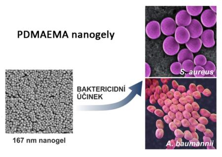 PDMAEMA nanogely – hydrofilní hydrogelové částice s baktericidním účinkem