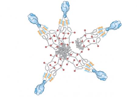 Pokročilé makromolekulární vakcíny pro léčbu infekčních a nádorových onemocnění