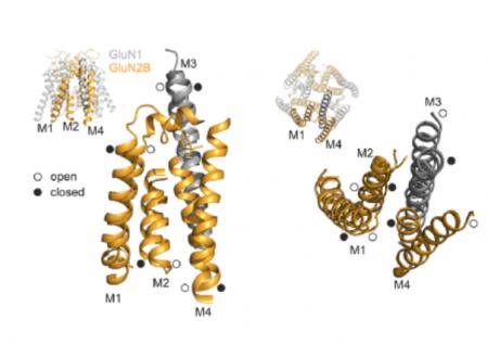 Steroidní látky jako modulátory mutovaných NMDA receptorů