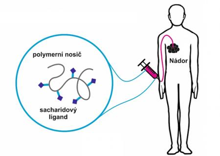 polymerní terapeutika bez léčiv pro prevenci a terapii rakovinných onemocnění